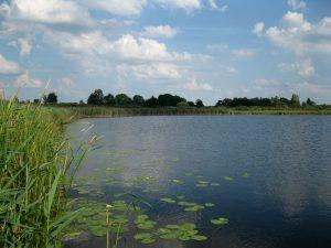 jezioro_slone_karpiowe_lowiska_lubelskie_