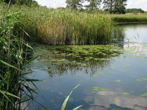 jezioro_slone_lowiska_lubelskie_15