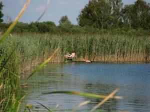 jezioro_slone_lowiska_lubelskie_Chutcze_kapielisko