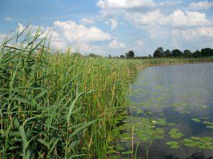jezioro_slone_okoniowe_lowiska_lubelskie