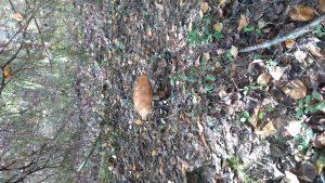 Skandynawia grzyby